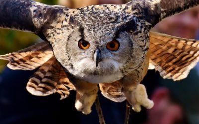 Owls – SRP Week 3