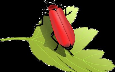 Bugs – SRP Week 9