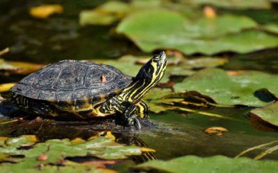 Turtles – SRP Week 12