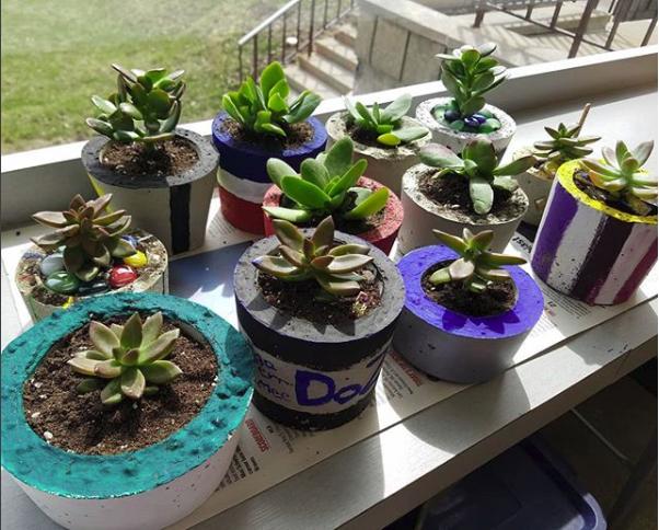 Succulent plants inside of concrete planters.