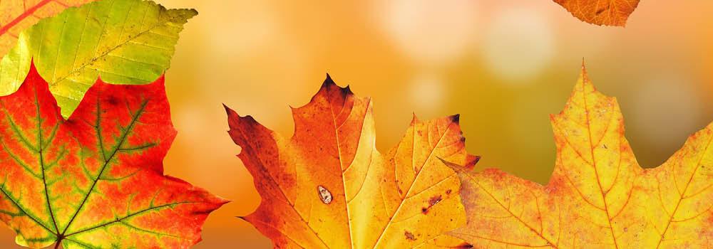 Fall foilage